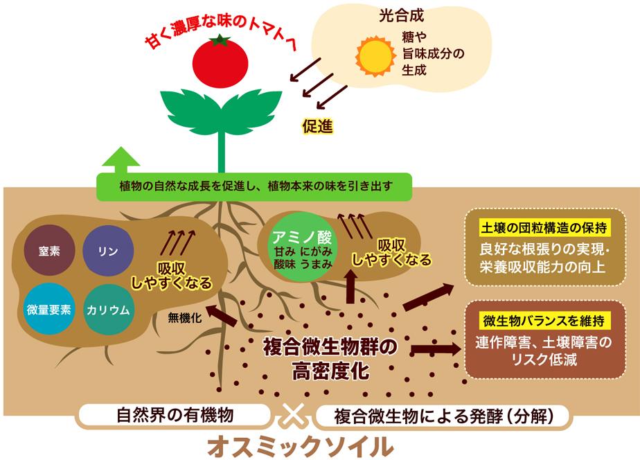 オスミックソイルとトマトの育つ仕組み